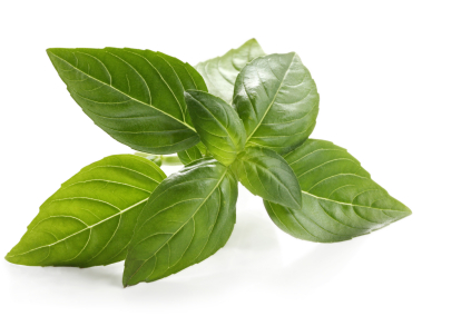 Basil Sweet ct. linalol Essential Oil