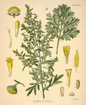 Wormwood Essential Oil (True Absinthe)